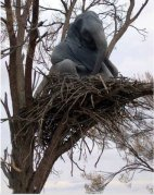 elephant-tree-nest