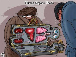 human organ trade