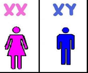 biologisches Geschlecht