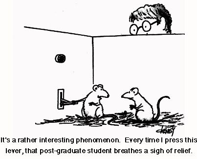 rat_student cartoon