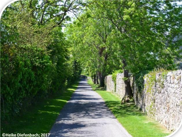 Castle to lane carew