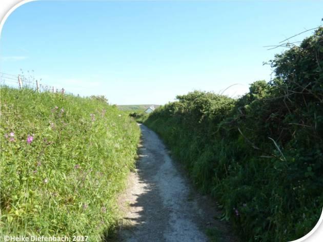 Lane to beach